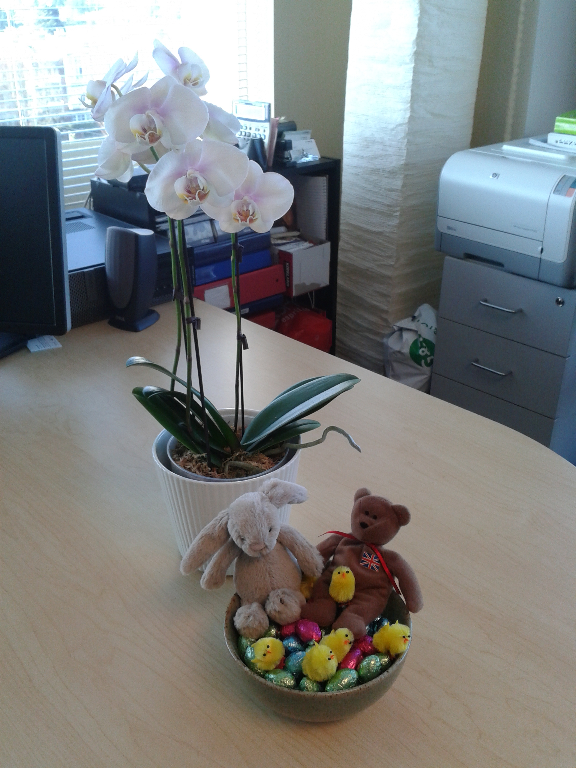 Orchid and easter basket, gifts at work