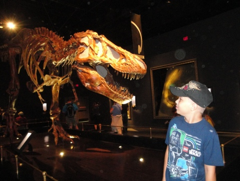 Visiting the scary dinosaurs at Tryrroll Museum