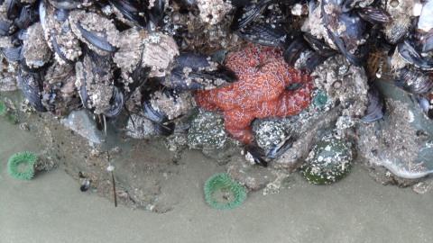 Colourful sea anemones and a bright orange starfish