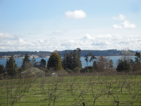 Apple orchard by the sea
