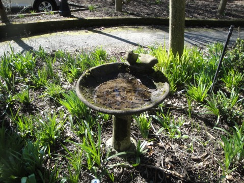 Quaint birdbaths are scattered around the gardens