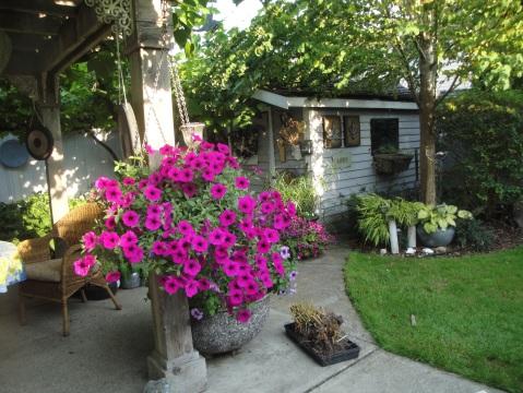 A beautiful backyard