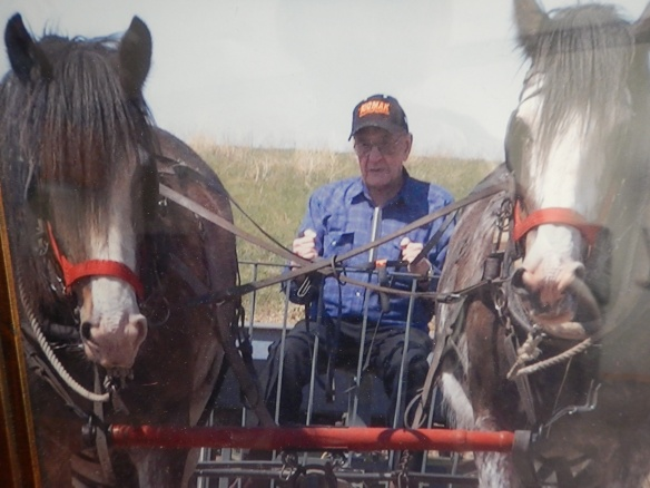 Great Uncle Paul with a team of horses