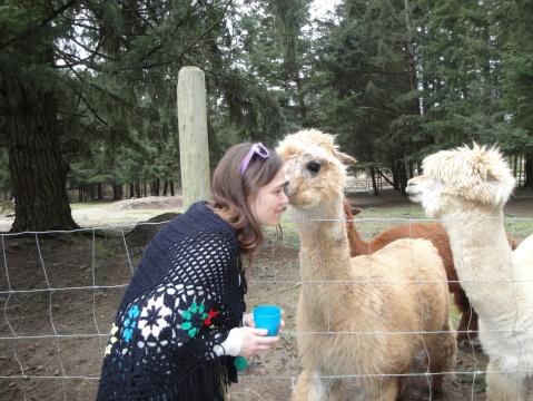 Getting a kiss from an alpaca