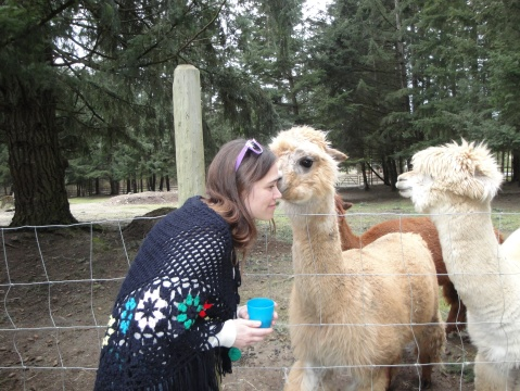 Getting a kiss from an alpaca