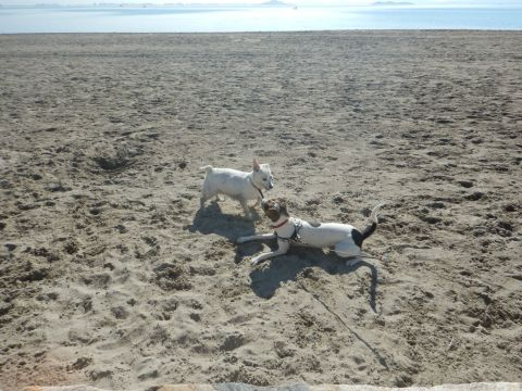 Sometimes she meets another dog at the beach and gets to play